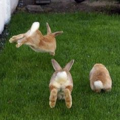 running bunnies , posted by the best Cute Bunny Pictures website. Funny Bunnies, Baby Bunnies, Cute Bunny, Bunny Rabbits, Bunny Bunny, Easter Bunny, Bunny Fufu, Adorable Bunnies, Bunny Tail