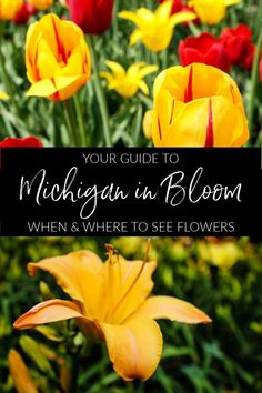 Mitten In Bloom Guide - When & Where To See Flowers In Michigan - The Epicurean Traveler Michigan Travel, Michigan Garden, Travel Usa, Travel Tips, Travel Articles, Travel Info, Time Travel, Travel Ideas, Spring Wildflowers