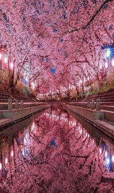 Cherry blossom are on huge rate in japanYou can find Cherry blossoms and more on our website.Cherry blossom are on huge rate in japan Beautiful Landscapes, Beautiful Images, Cherry Blossom Japan, Blossom Trees, Amazing Nature, Places To Travel, Travel Destinations, Nature Photography, Travel Photography