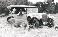Vintage safari 1930's                                                       …
