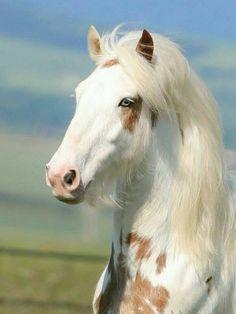 #HORSE##ANIMALS# #PETS##CUT#