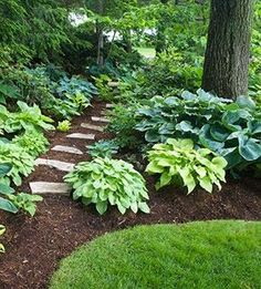 Love the Hosta plants under shade tree with stone in mulch garden path...looks easy to do! (Picture only)