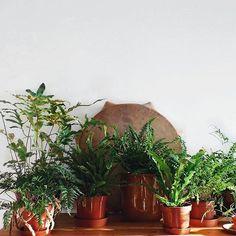 Ferns everywhere! Ferns, Plants, Fern, Plant, Planting, Planets