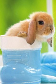 Bunnys are so cute!! and that is my opinion, you can`t change me!!