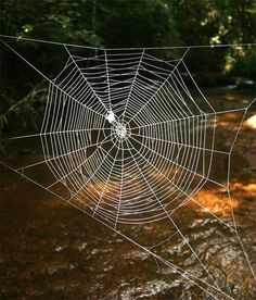 Madagascar's bark spider (Caerostris darwini) makes up to 82 feet large orb nets, 10 x stronger than Kevlar