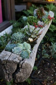 Tree Stump/log with succulents. Love this even with shade loving plants with some moss growing on top. More #GardeningDesign