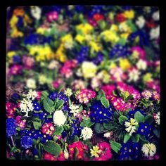 #flowers #nisantasi