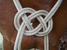 .. Horse Gear, Horse Tack, Cowboy Gear, Cowboy Hats, Knot Braid, Horse Jewelry, Horse Crafts, Horse Training, Horse Farms