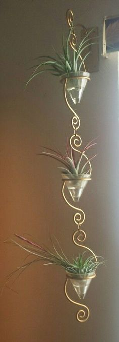 Air plants display USE A RAIN CHAIN FOR HOLDING AIR PLANTS.