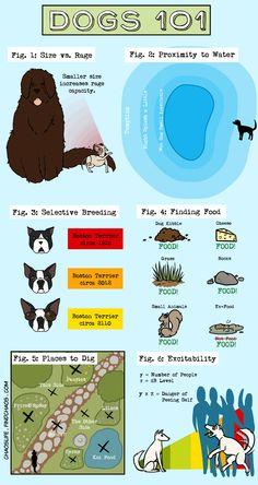 Dog Info