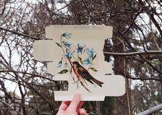 New Birds Painted on Pharmaceutical Packaging by Sara Landeta