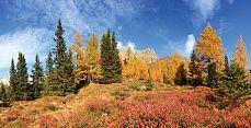 Herbstliche Bäume #wallpaper #panoramaview #Tapete #tapeterie #Herbstwald