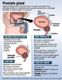 Nursing Tips, Nursing Notes, Human Body Facts, Reproductive System, Body Organs, Nurse Practitioner, Medical School, Nursing Students, Health Care