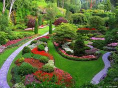 Fabulous Colorful Home Garden with Colorfull Plant and Flowers and Stepping Walk Area