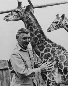 William Holden (April 17, 1918 – November 12, 1981), died ...