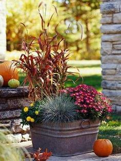 Fall Container Ideas Fabulous Fall Containers Great Tips and Ideas! Including, from midwest living , this nice simple fall container.Fabulous Fall Containers Great Tips and Ideas! Including, from midwest living , this nice simple fall container. Ideas Para Decorar Jardines, Blue Fescue, Fescue Grass, Fall Containers, Succulent Containers, Container Flowers, Fall Container Gardening, Metal Containers, Fall Flower Arrangements