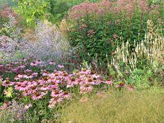 http://dutch-garden-locus-flevum.tumblr.com/