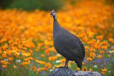 Visit the Walter Sisulu Botanical Gardens