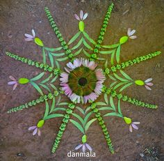 danmala 100   golden tarantula   sunflower, echinacea, chaste berry, mimosa leaf, and some other mysterious roadside leaf