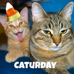 Tis The Day #caturday #cats #candycat