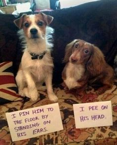The dachshund always wins