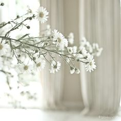 white flowers, sunlight & curtain...... love it !