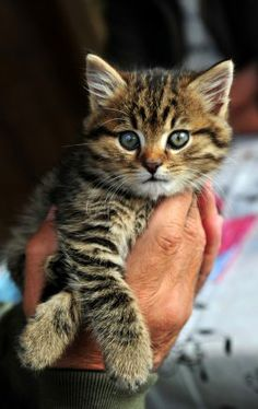 http://www.pinterest.com/backyardwillow/cats-are-kids-too/