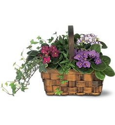 Mixed African Violet Basket  Item TF128-2
