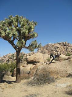 The Complete Yoga Plus Blog- Yoga at Joshua Tree National Park