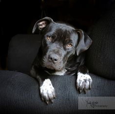 Lucy- available for adoption through Family Dogs New Life | Portland, OR