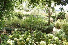 soldera white garden