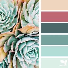 today's inspiration image for { succulent hues } is by @__janiceyip ... thank you, Janice, for sharing your wonderful photo in #SeedsColor !