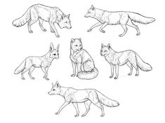 How to Draw Foxes of All Shapes and Sizes