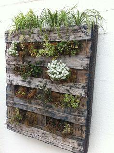 Vertical garden using wooden pallet, chicken wire. moss, potting soil, landscape material.  Clever idea.