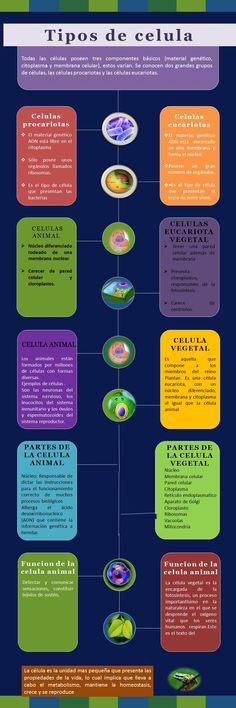 Tipos de célula: eucariota y procariota