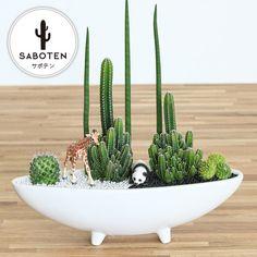 how to draw a cactus flower Succulent Bowls, Succulent Gardening, Succulent Arrangements, Cacti And Succulents, Planting Succulents, Cactus Plants, Mini Cactus Garden, Cactus Flower, Cactus Terrarium