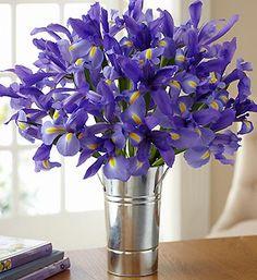 I love blue irises - kinda cool in this aluminum vase.