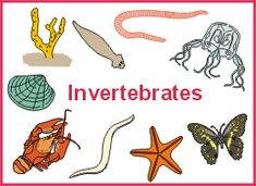 Jugando aprendemos en 4º: Unit 4. Invertebrates