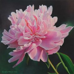 """Peony Study Three"" - Original Fine Art for Sale - © Leslie Macon"