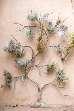 Air plant  sculpture... DIY Heaven!