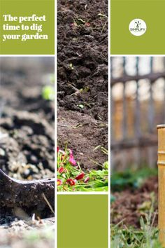 When digging a spot for a new garden, the best time of year to dig is in the fall, right before the winter frost. This can ensure that pesky weeds don't make their way into your garden, let alone survive the winter. // how to make garden // diy garden shed // impatient // peaing // container garden // gardening pots #deckgardens #gardeing #vegetablegarden Vegetable Garden Soil, Garden Pots, Organic Soil, Organic Fertilizer, Raised Bed, Raised Garden Beds, Container Gardening, Gardening Tips, Leafy Plants