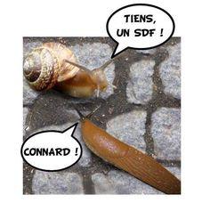 Escargot : Limace qui a accédé à la propriété. (Laurent Baffie .)