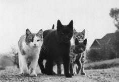 vintage Mafia cats. 30's   26 Mafia cats pictures
