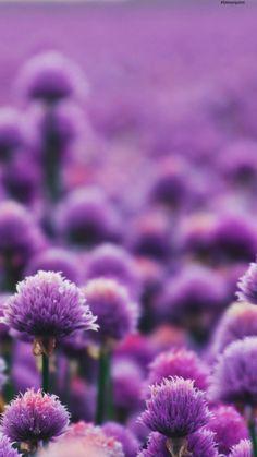 #fondodepantalla #floresmoradas #minimalista #morado Plants, Instagram, Link, Tumblr Backgrounds, Wallpapers, Flowers, Minimalist Chic, Plant, Planets