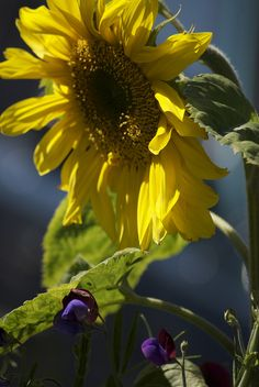 sunflowers standing tall~