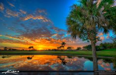 Palm Tree Sunset at Golf Course Abacoa Jupiter Florida