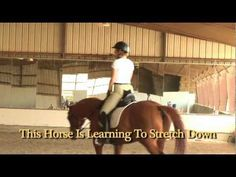 """Master Horseman/Classical Dressage Trainer Will Faerber demonstrates how to encourage your horse to raise its back, engage its hind end and """"get connected."""" Will shows new students the beginning stages of stretching exercises to help horses seek contact with the bit, raise its back, relax, become rhythmic, and """"step under"""" thereby creating the s..."""