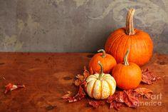 Decorative Fall Pumpkins by Verena Matthew