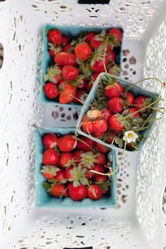 Cannelle et Vanille: The days of strawberry fields and farms