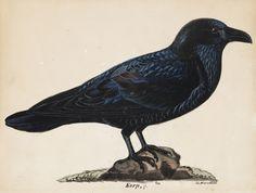 Wilhelm von Wright: Korppi, 1835. Kansallisgalleria / Ateneumin taidemuseo, kok. Aune Lindström. Kuva: Kansallisgalleria / Ainur Nasretdin